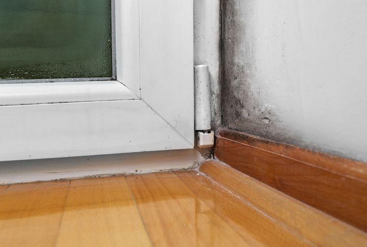mucegai în casa