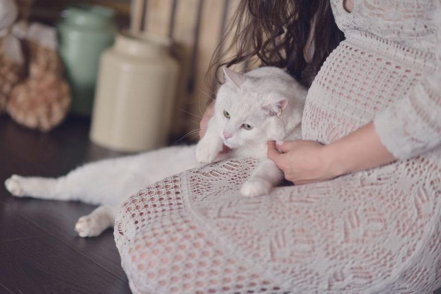 Pisicile și femeile însărcinate