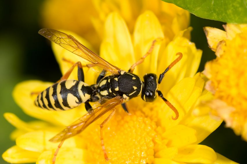 alergia-la-intepatura-de-viespe-totul-despre-mame