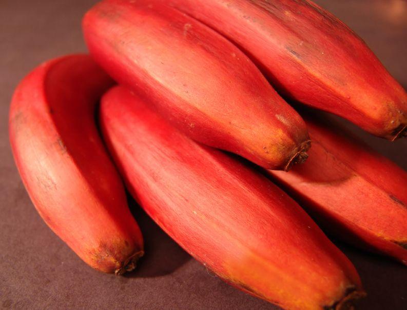 bananele-rosii-totul-despre-mame