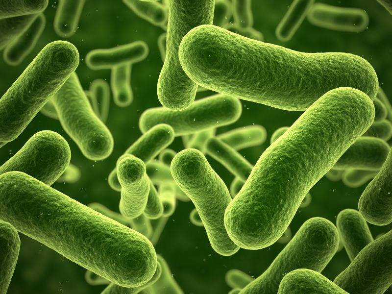 e-coli-totul-despre-mame