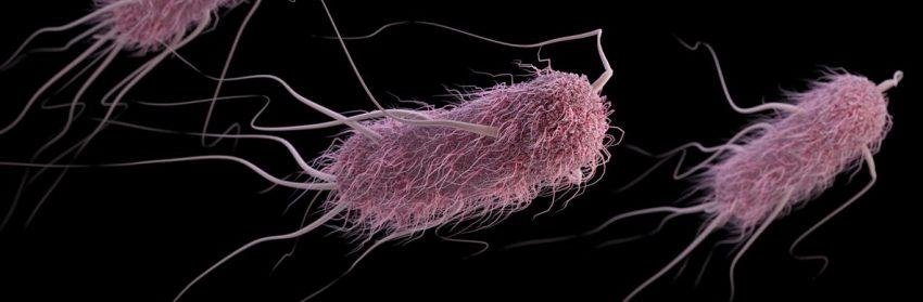 Escherichia coli-totul-despre-mame
