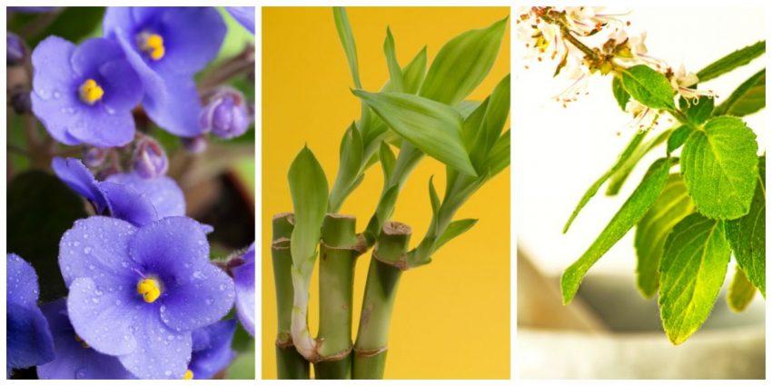 plante pentru camera copiilor totul despre mame