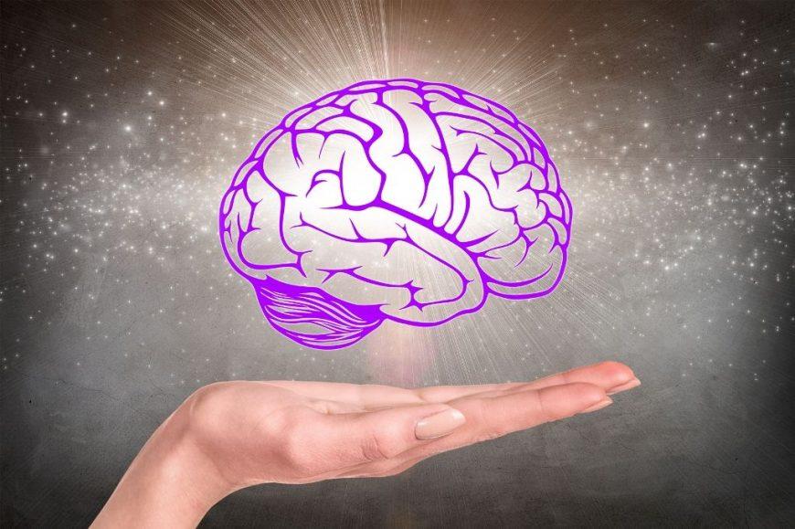 dezvoltarea creierului