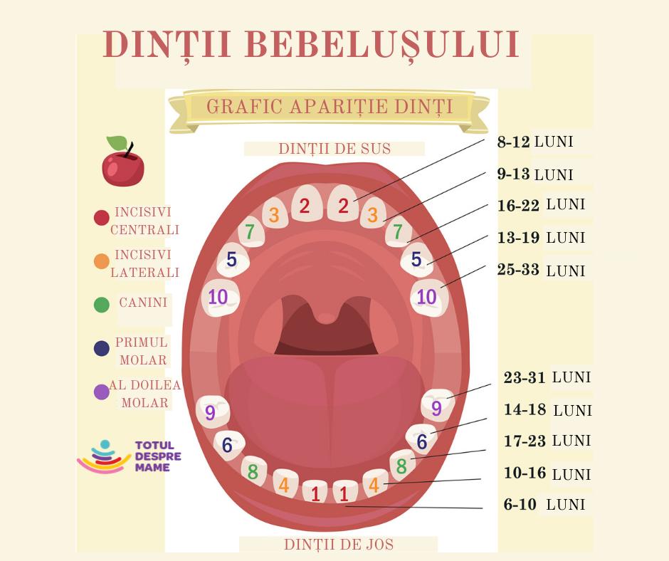 graficul creșterii dinților bebelușului