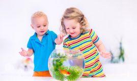 copii care se joaca cu un acvariu