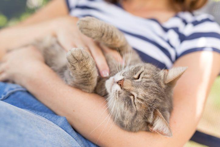 fetita cu pisica