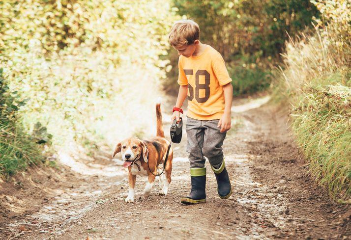 copil caine beagle