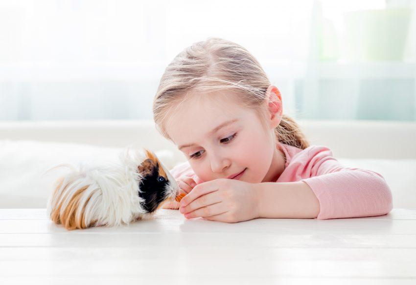 Animale de companie pentru copii
