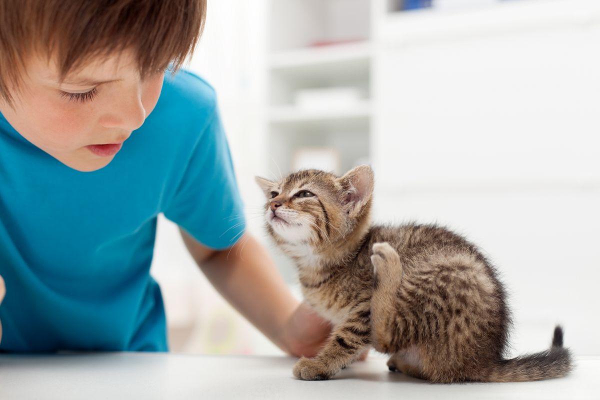 copil pisica