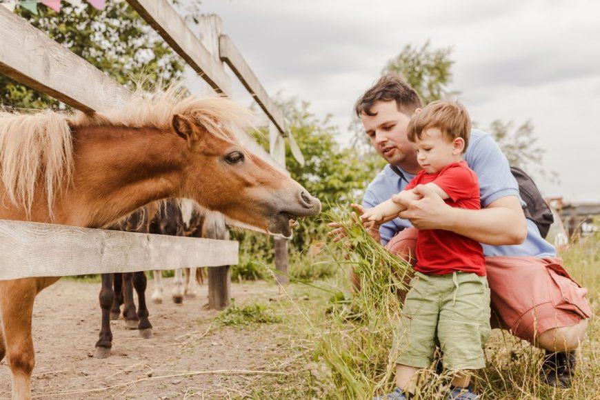 copil cal tata animale copii