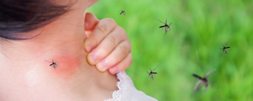 bolile provocate de țânțari