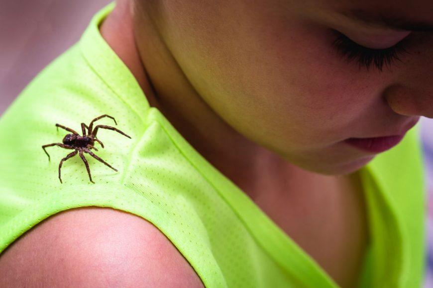 mușcătura de păianjen