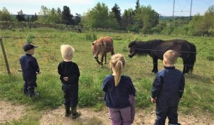 Cum se redeschid școlile în Danemarca